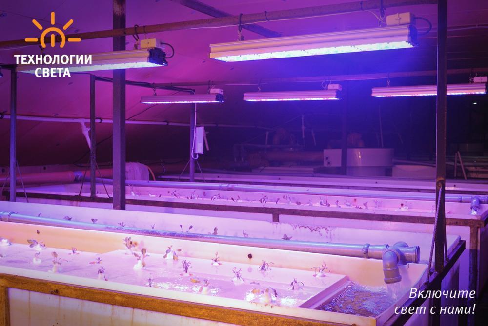 Ферма по выращиванию листовых овощей по технологии замкнутого цикла